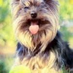 teste de caráter do cão